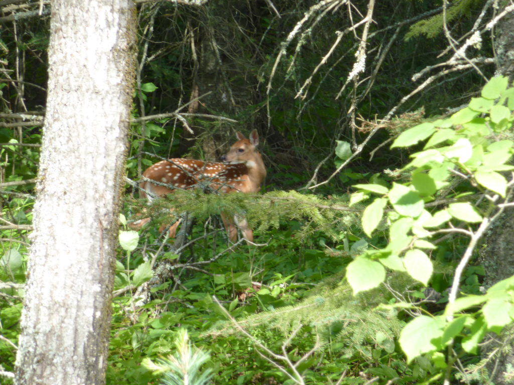 Wolf Howl Guided Group Trip- River Point Outfitting Co.-Ely MN