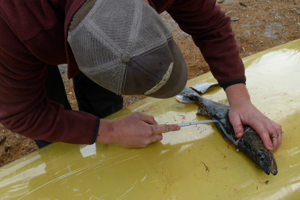 BWCA Fishing Tips for Successful Fishing   River Point